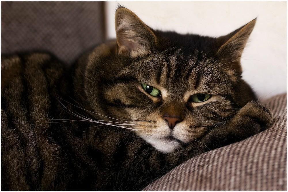 Симптомы распространенных заболеваний кошек