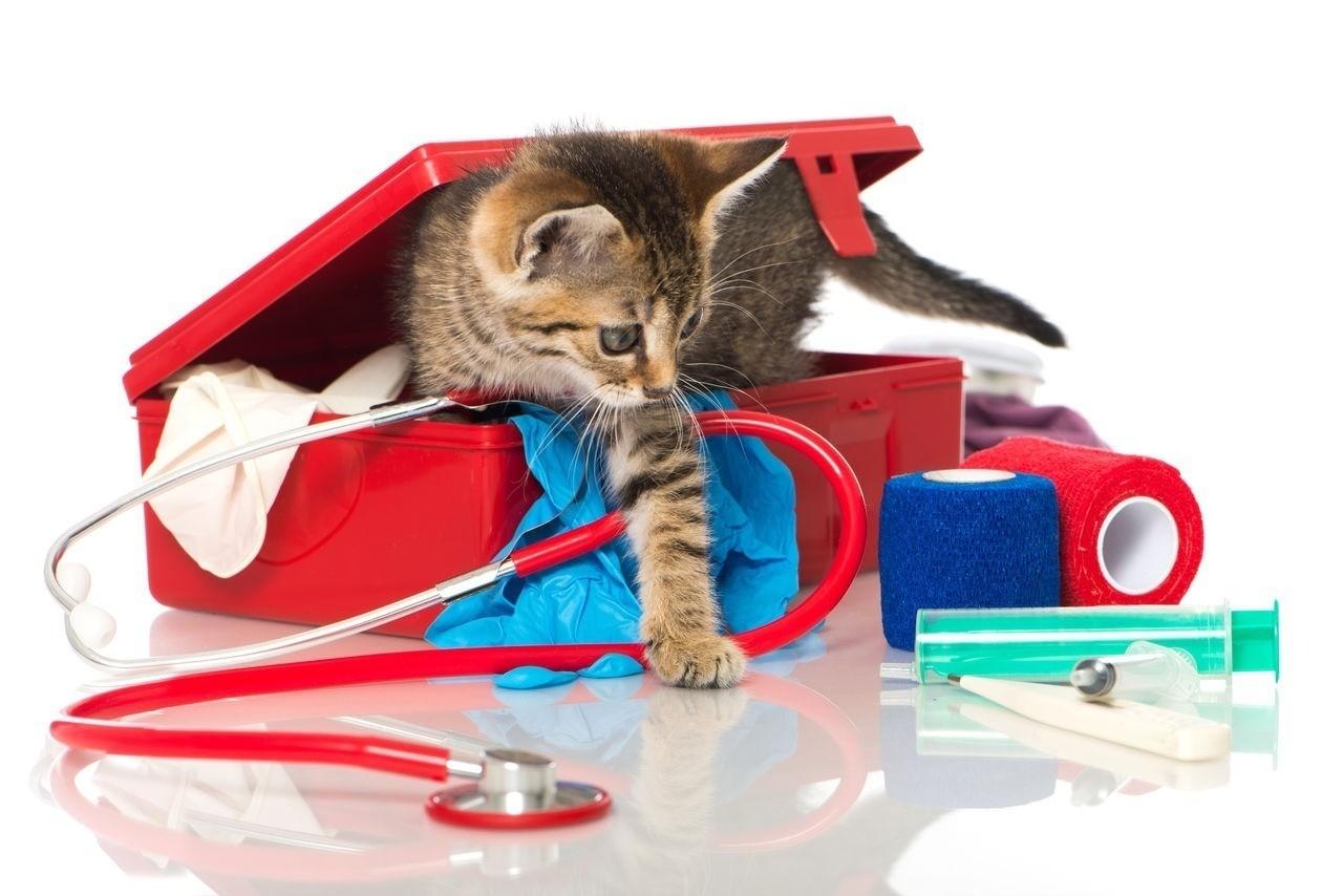 Когда в доме появляется кошка, необходимо завести специальную аптечку
