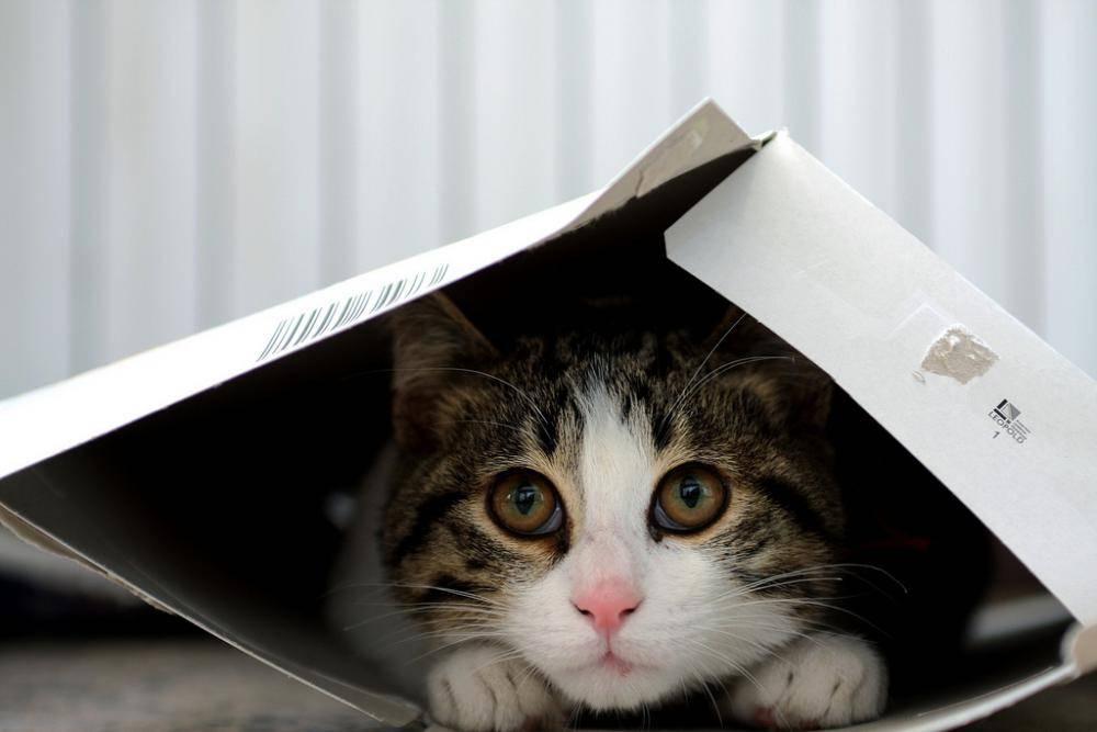 Кот прячется от жары