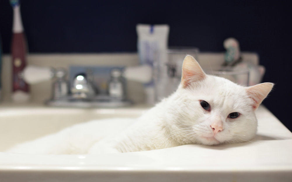 Найти спасение от жары кот может в ванной комнате