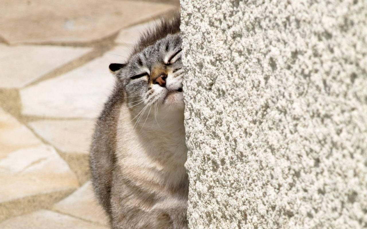 Признак того, что кошка просит кота - это её излишняя ласка