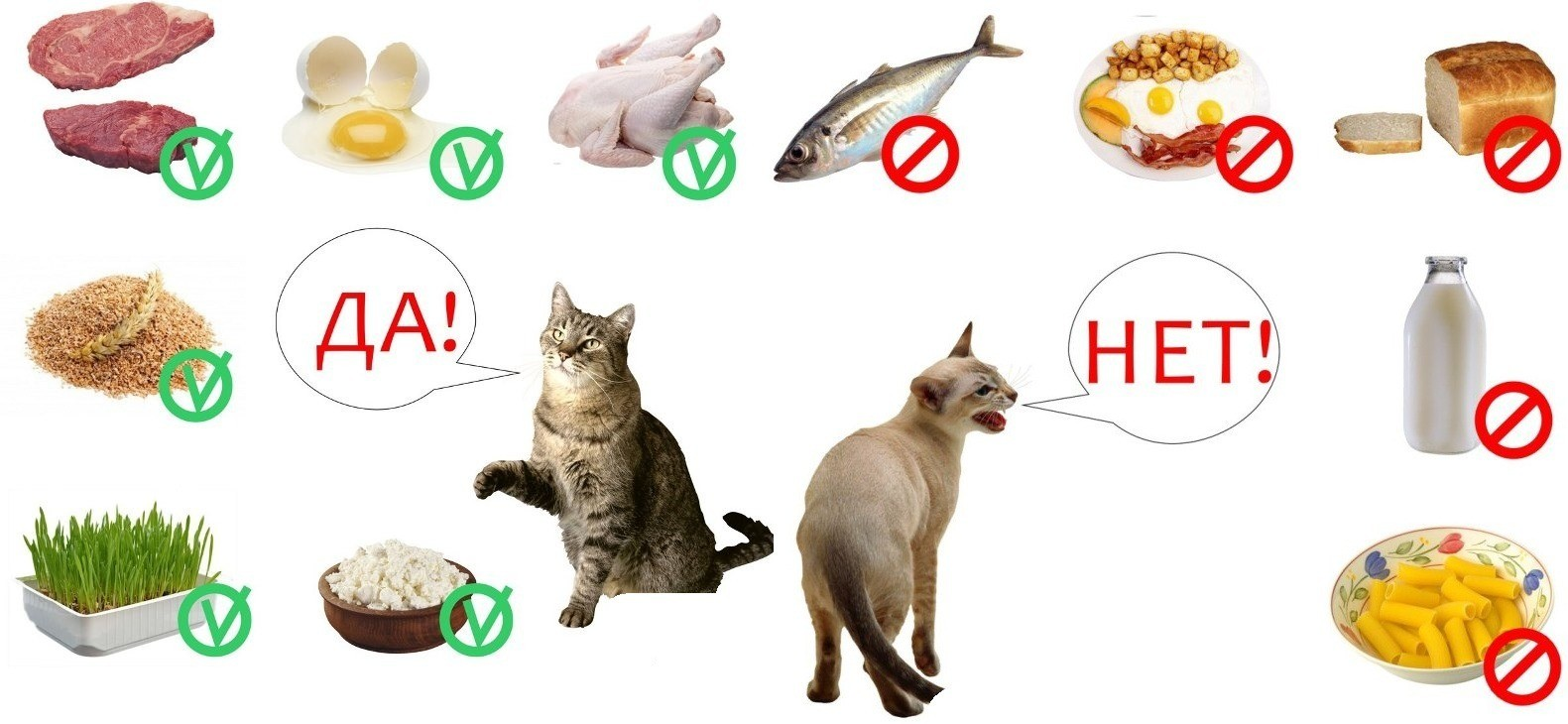 Что можно и что нельзя кошке