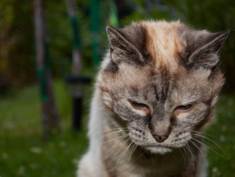 Важно обращать внимание на состав рвотных масс кошки