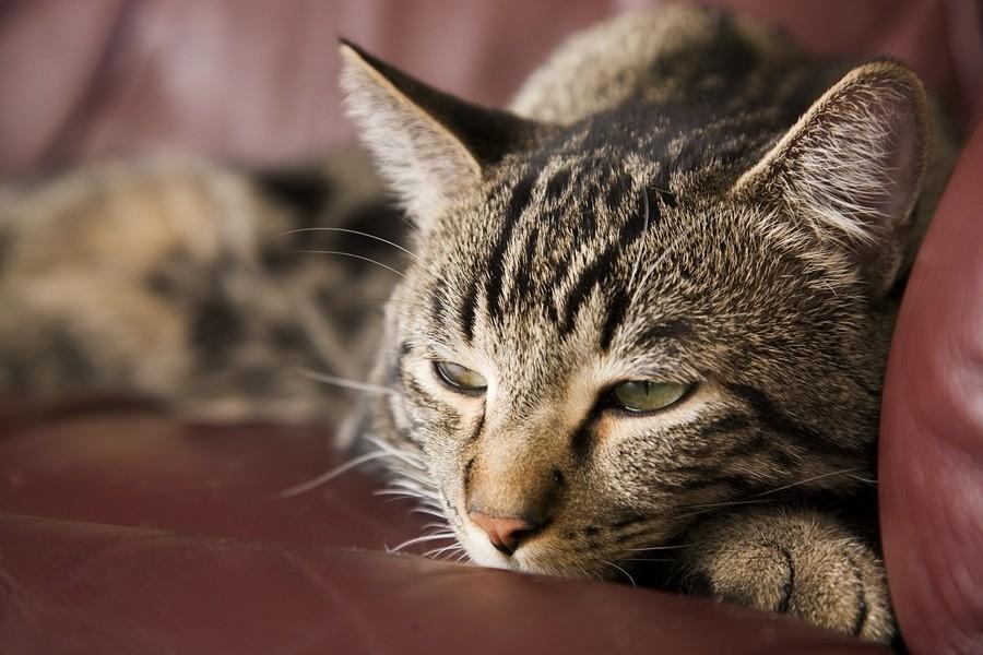 У животного во время чумки появляется сильное чувство жажды