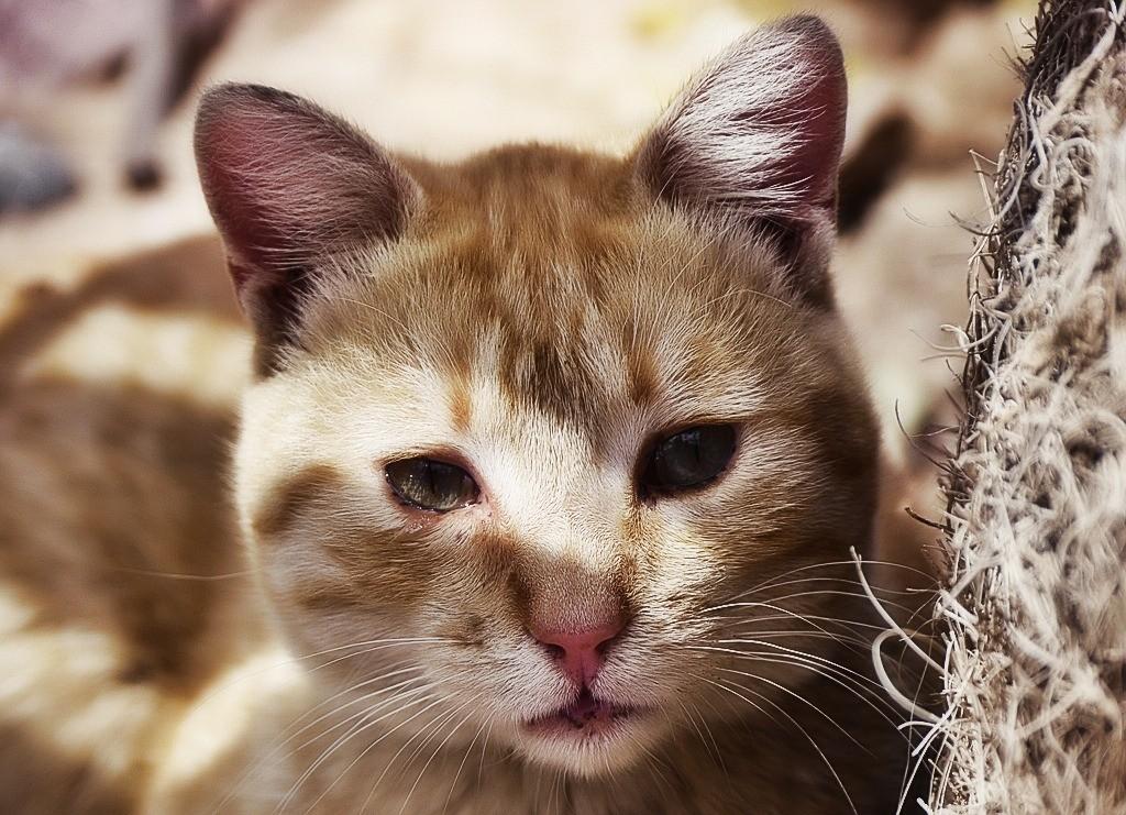 глисты у кошек симптомы и лечение