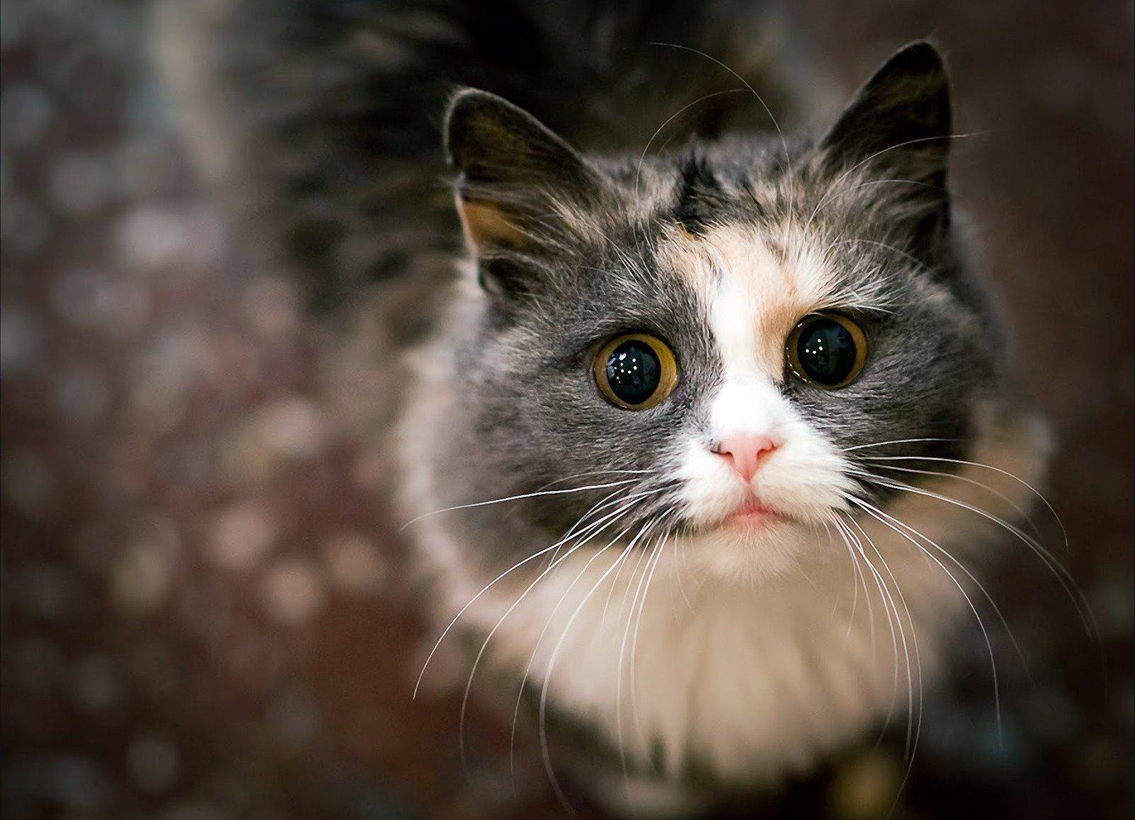 Может ли котенка тошнить от глистов thumbnail