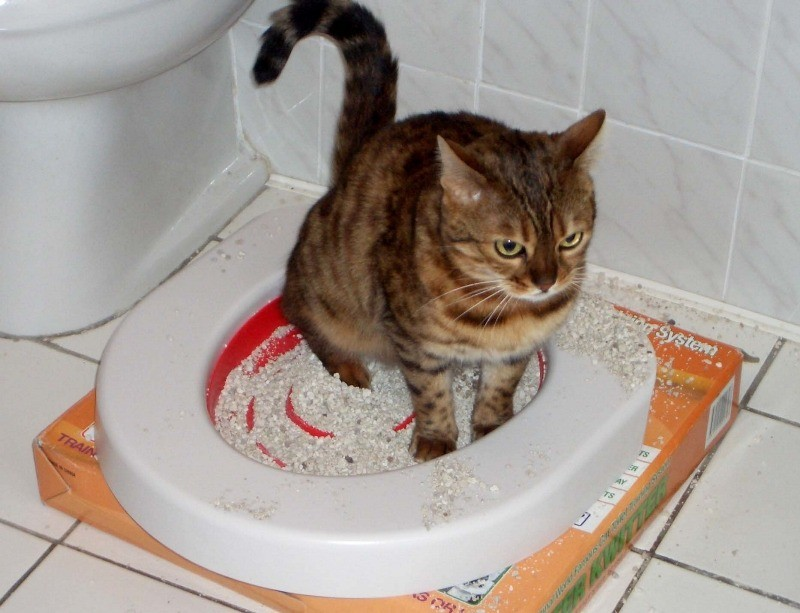 Понос - один из признаков проникновения глистов у кошек