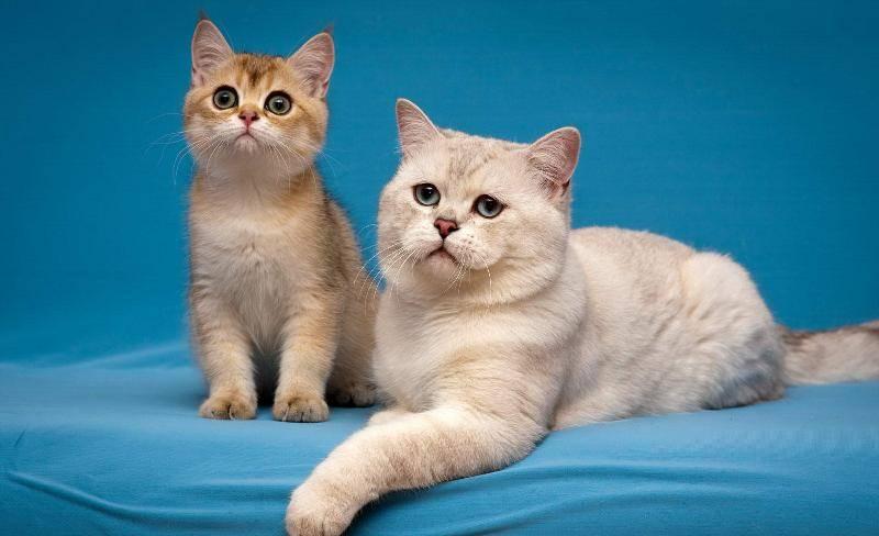 Каждую из выбранных кличек произнесите вслух при кошке по несколько раз и следите за реакцией животного