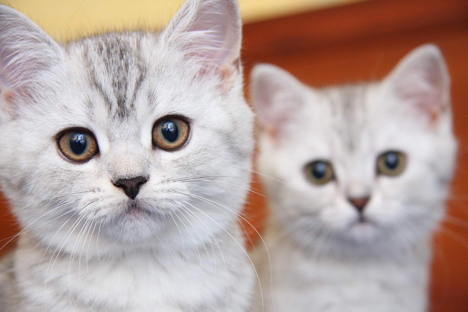Оригинальные имена для кошек-девочек можно придумать на основе самой обычной клички Мурка