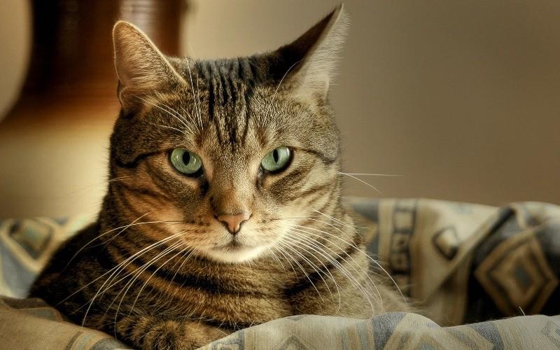 Обратите внимание на характер и внешность кошки прежде, чем давать кличку