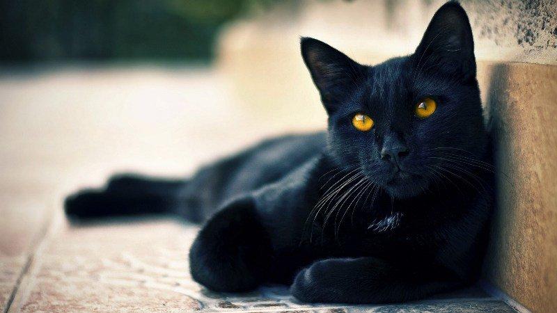 Кличку кошке можно дать согласно роду деятельности хозяина