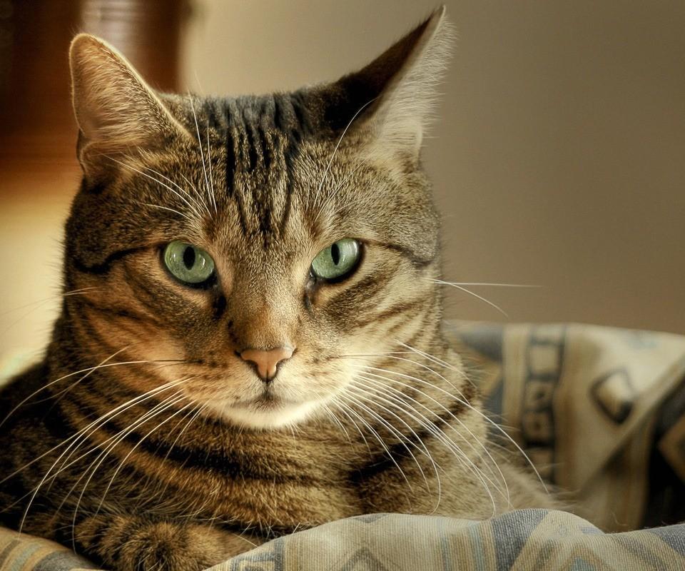 Если вы действительно желаете своему коту добра, серьезно подходите к вопросу поиска нового дома, попробуйте найти кого-то из хорошо знакомых вам людей