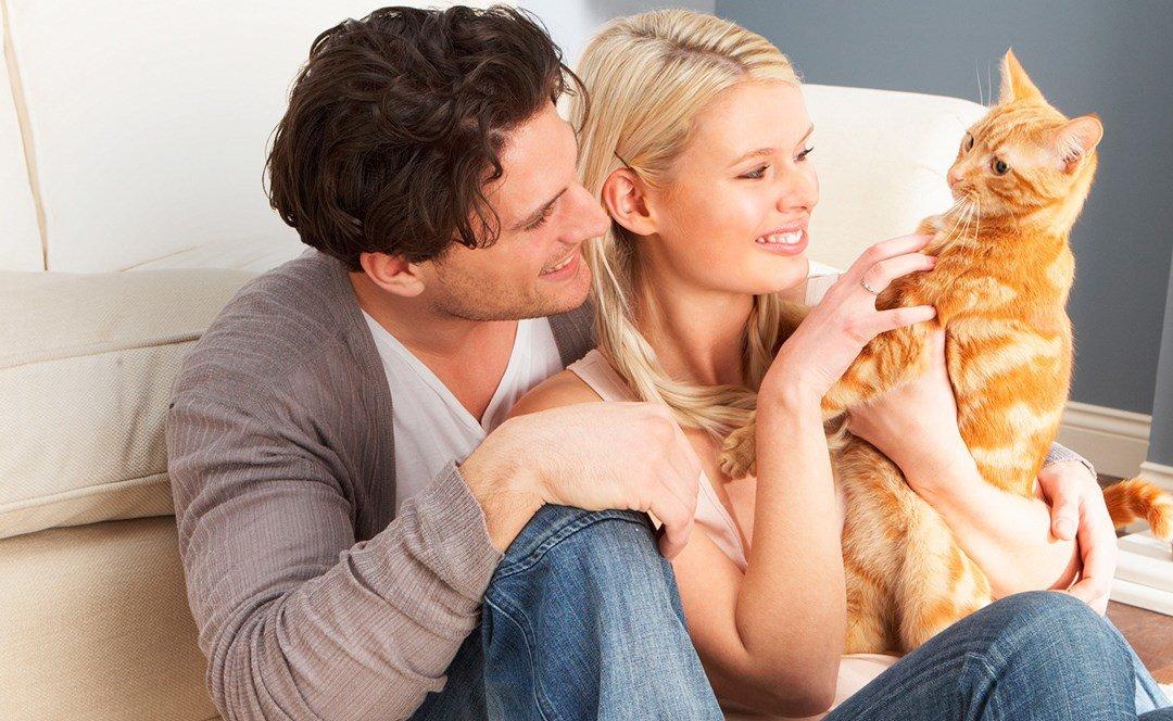 Отдать кошку лучше всего знакомым