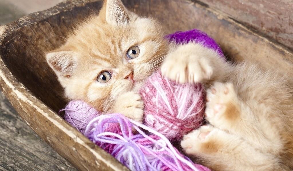 Серьезно подходите к вопросу поиска нового дома для кошки