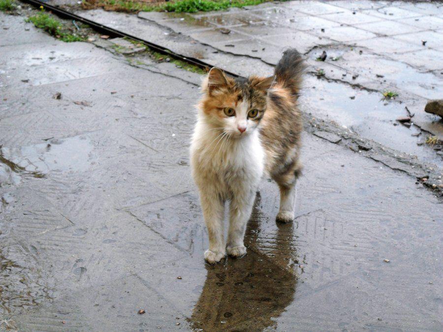 Ни в коем случае не выбрасывайте кошку на улицу