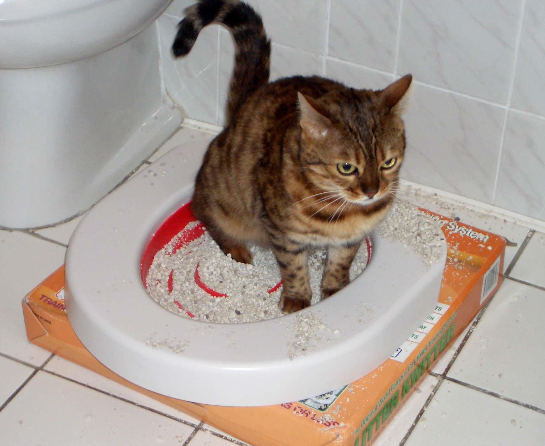 При упорном отказе кота ходить в лоток причина, возможно, кроется в наполнителе
