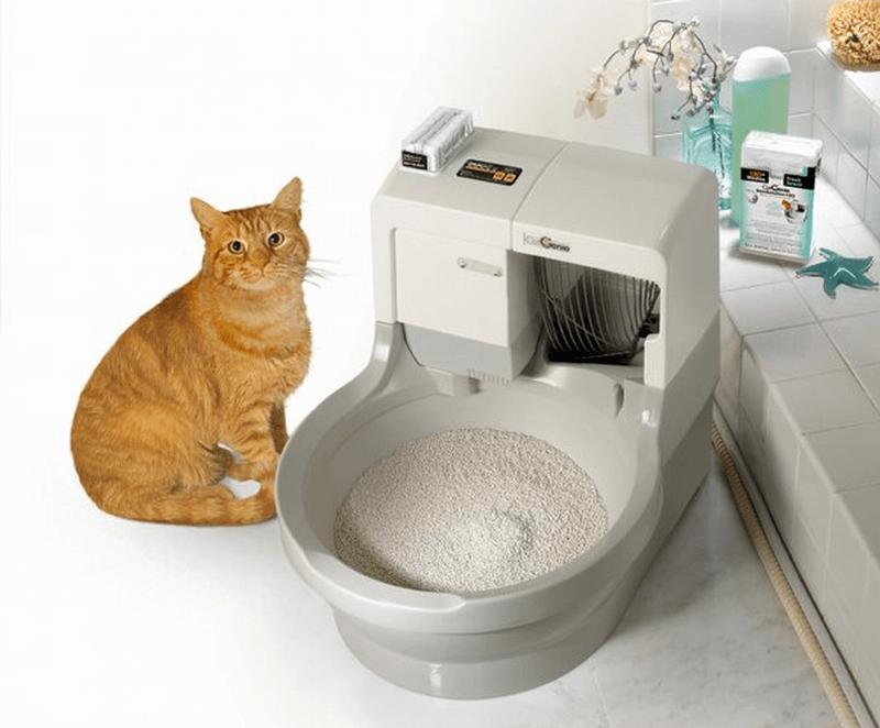 Чтобы приучить кошку к лотку, обмочите в моче бумагу и положите в кошачий туалет