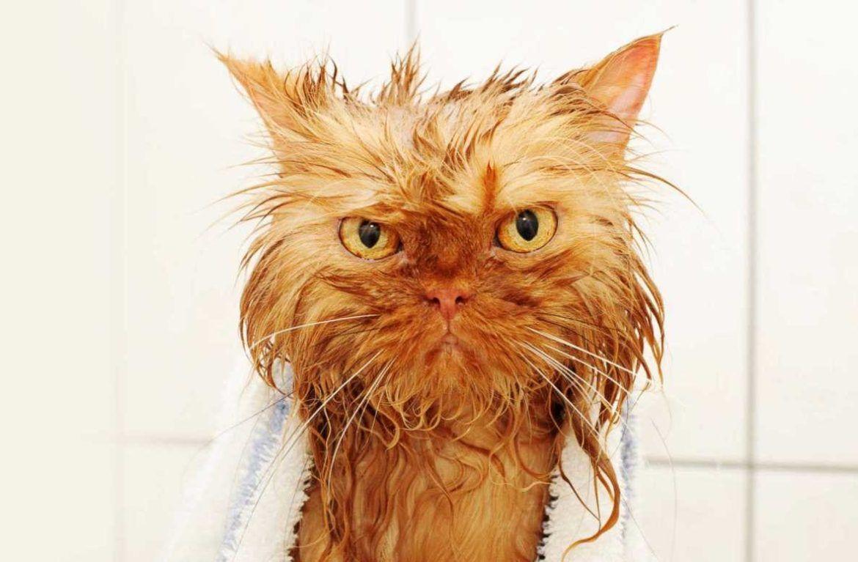 Вода избавляет шубки котов от статических электрозарядов