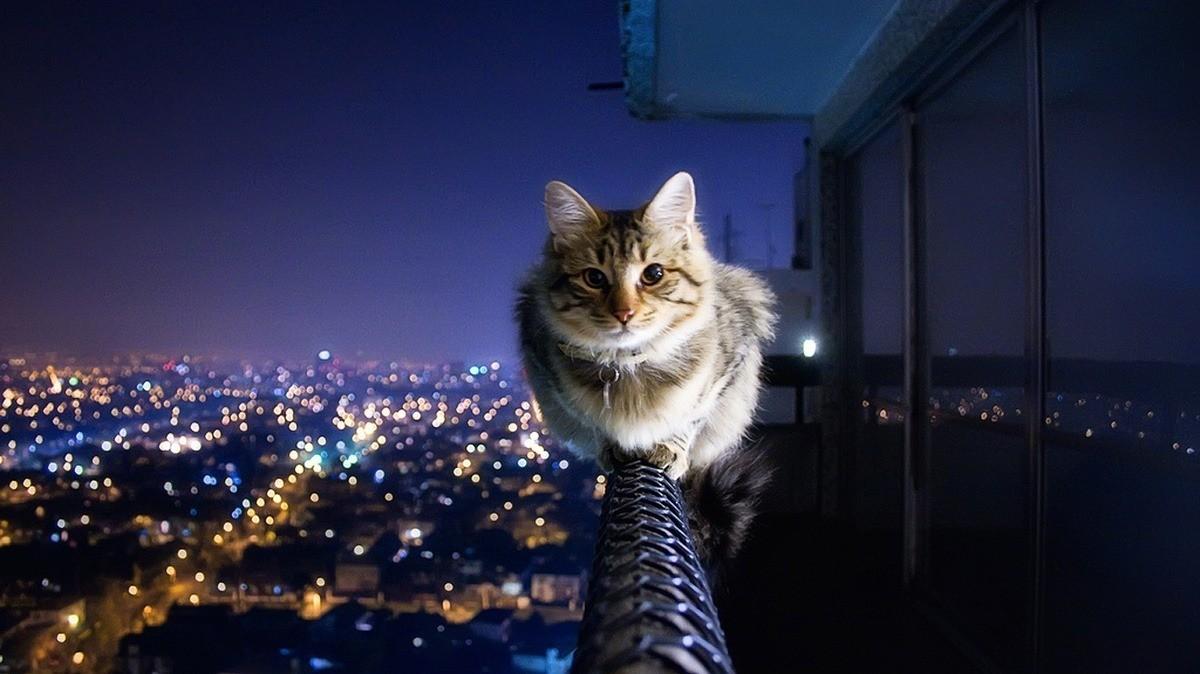 В разное время суток температурный режим у кошек незначительно отличается