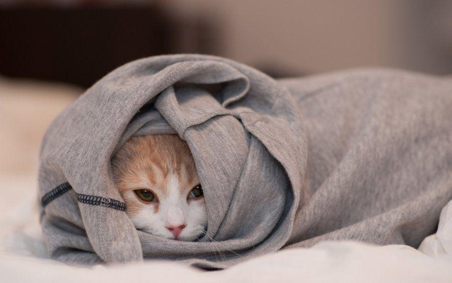 При изменениях температурного режима кошка может дрожать