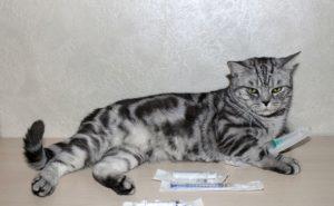 Кошка с шприцами