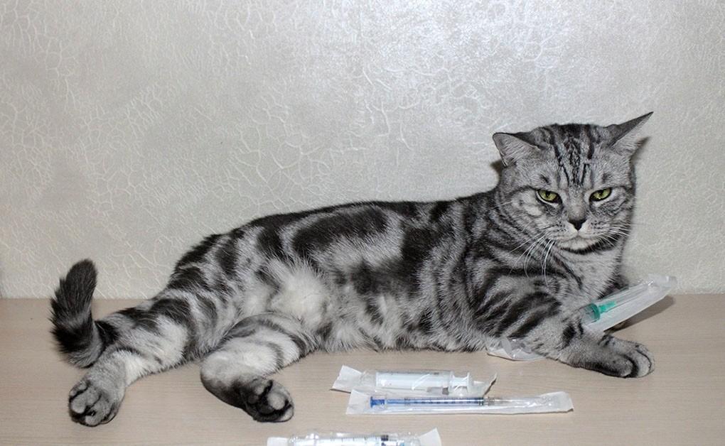 При мастите кошке делают инъекцию с новокаином