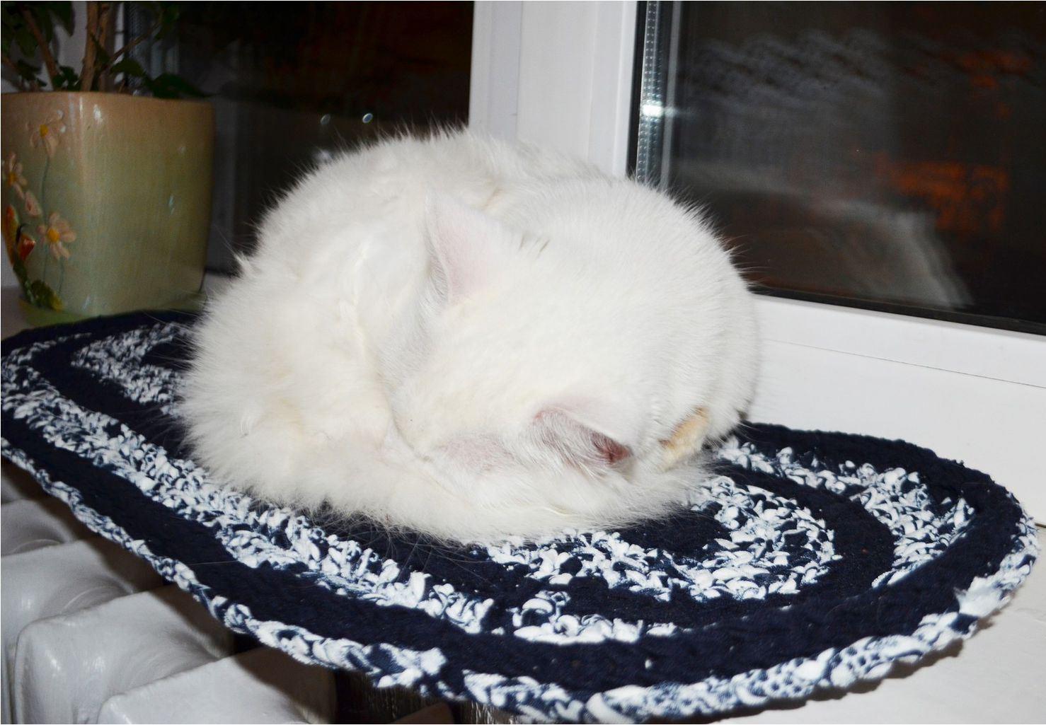 Приобретите теплый коврик при мастите у кошки