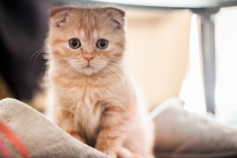 Продавать котят следует в возрасте 3-4 месяца