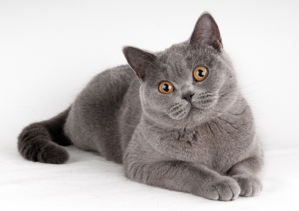 Как прикольно назвать кота и кошку