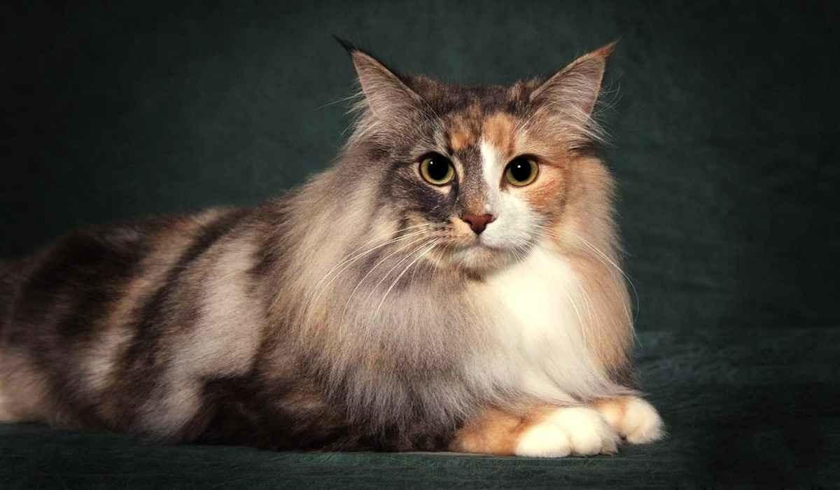 Выбирая кошке иностранное имя, Вы должны знать, что оно означает