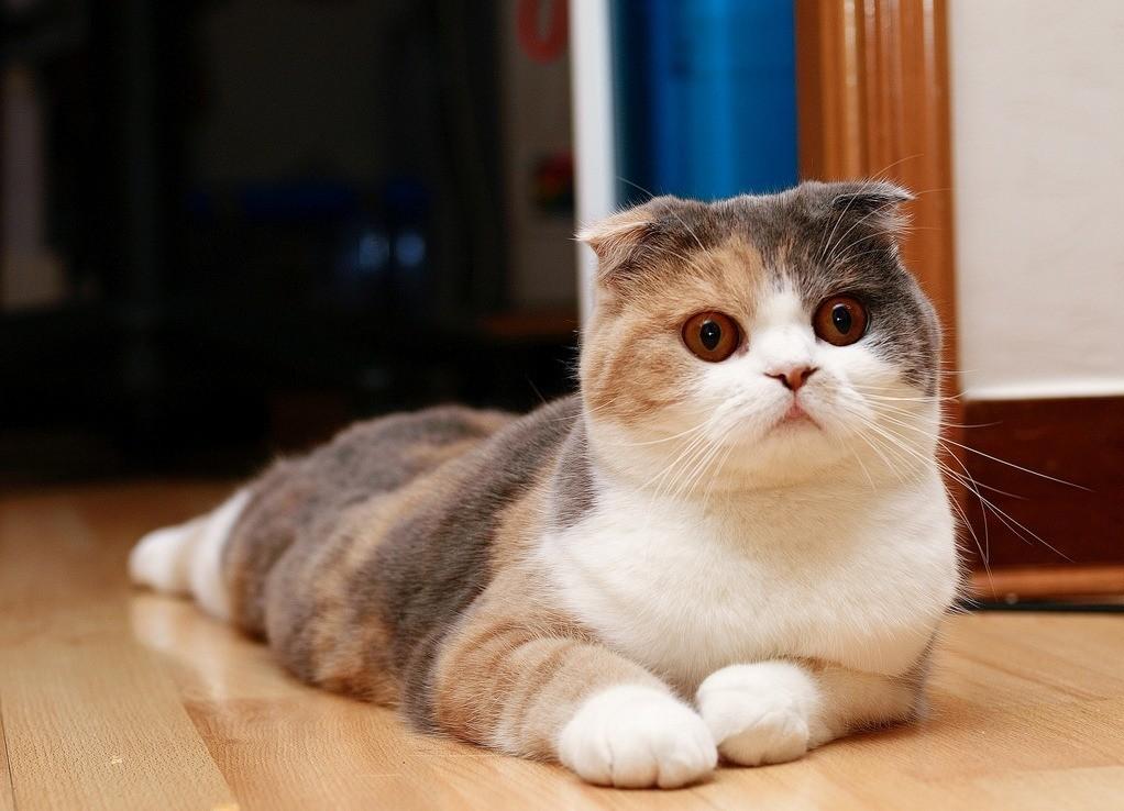 Любому представителю кошачьих, чтобы привыкнуть к кличке, требуется около месяца