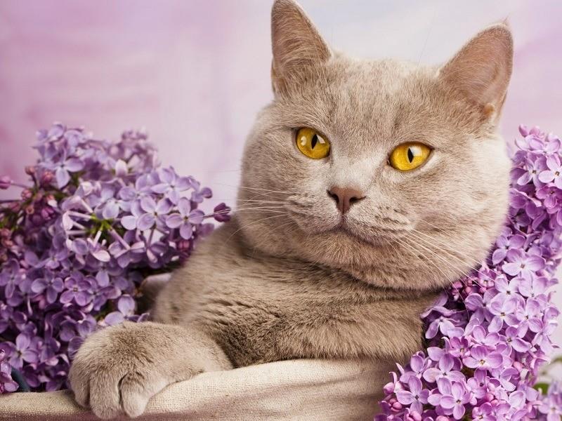 Человеческие имена не принято давать кошкам