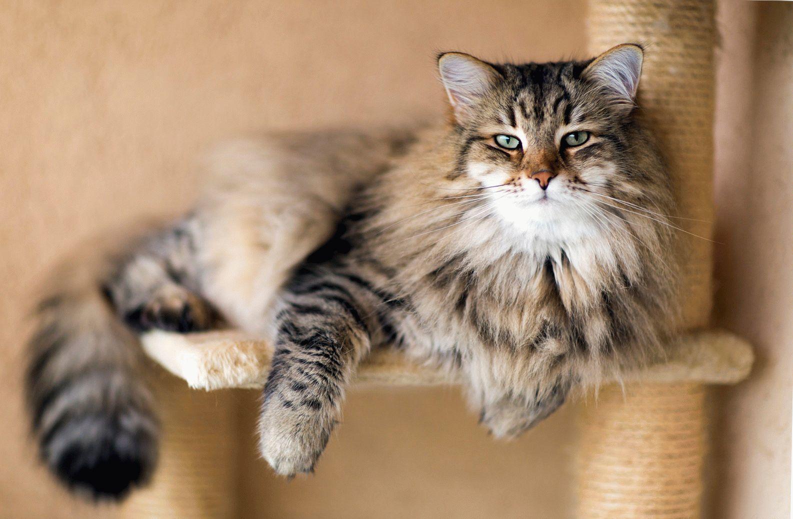 Кошки и коты прекрасно слышат и воспринимают свистящие и шипящие звуки