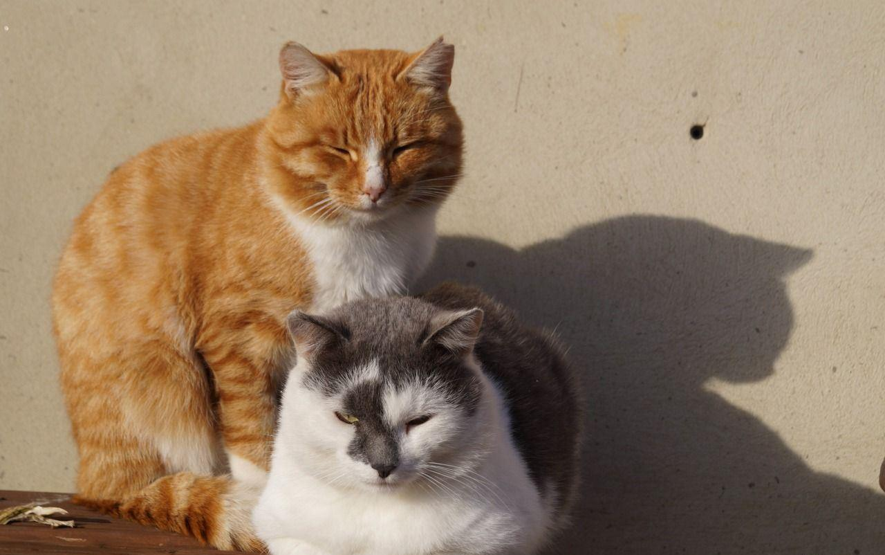 Кошек нужно на некоторое время вообще разделить по разным комнатам с закрывающимися дверями