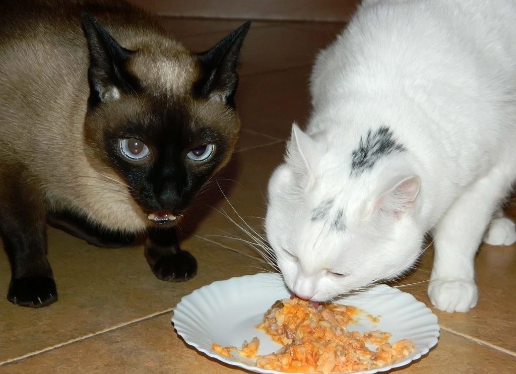 Кормить кота и кошку нужно только одинаковой едой