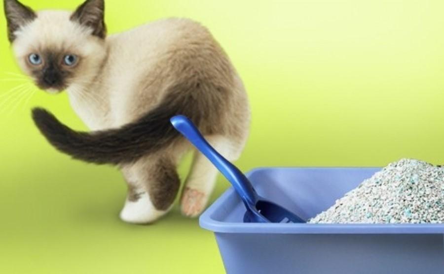 Желательно, чтобы у каждой кошки был свой лоток