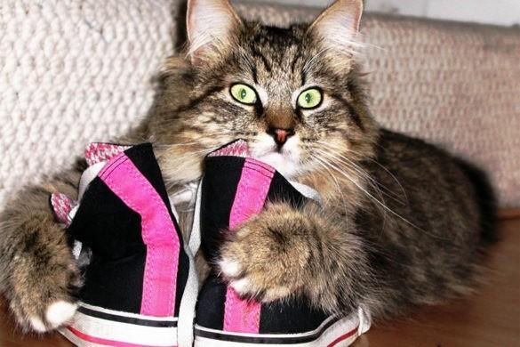 Кошка гадит не в лоток