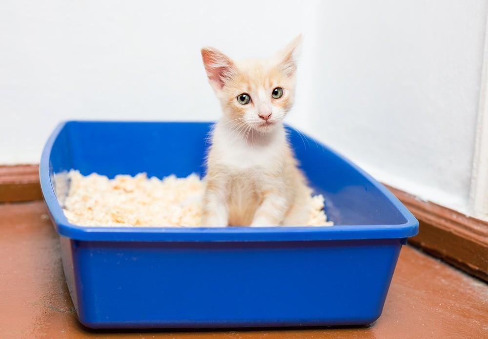 Чтобы отучить кошку гадить, нужно выявить и устранить причины такого поведения