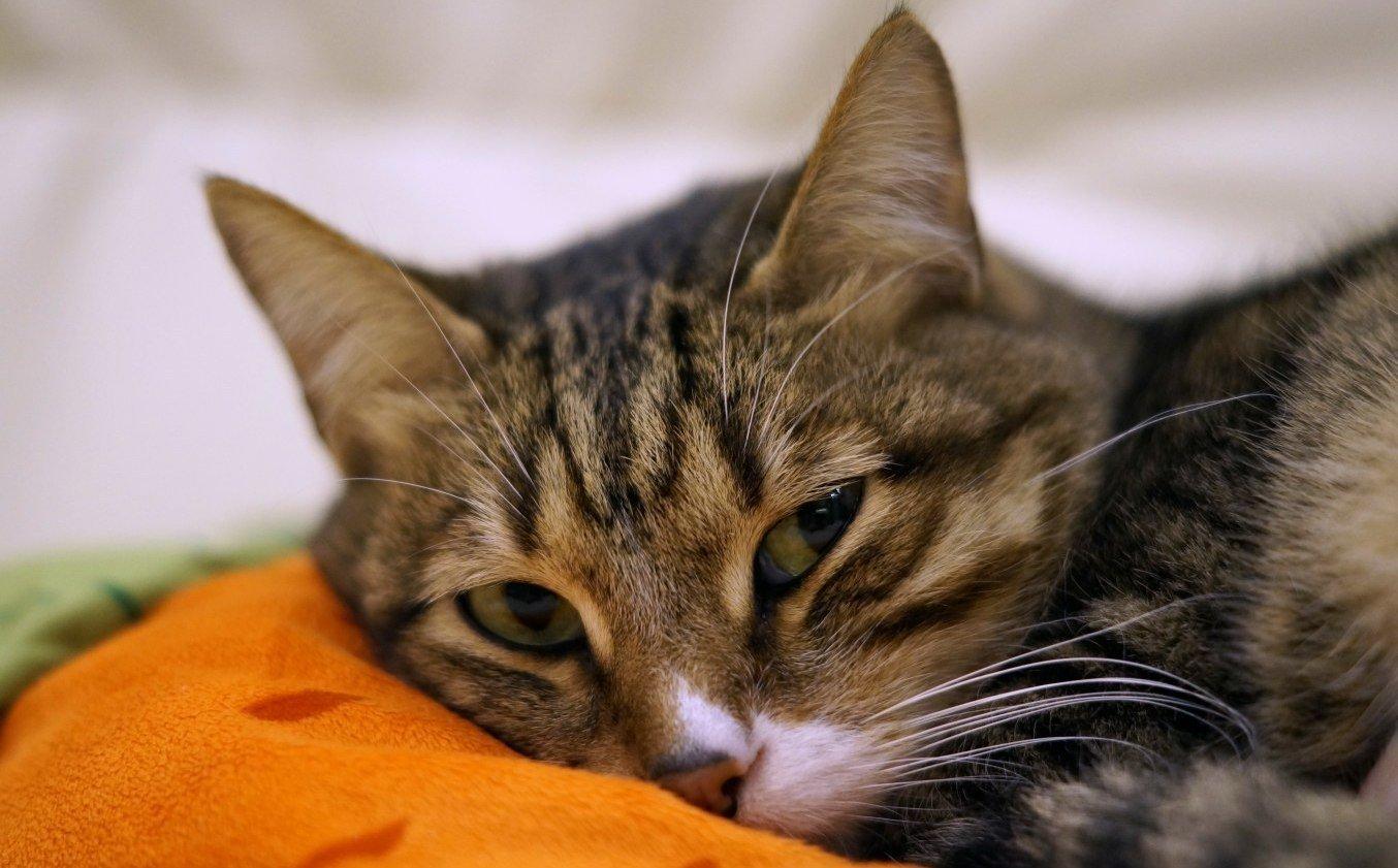 Различные болезненные ощущения могут заставить животное гадить где попало