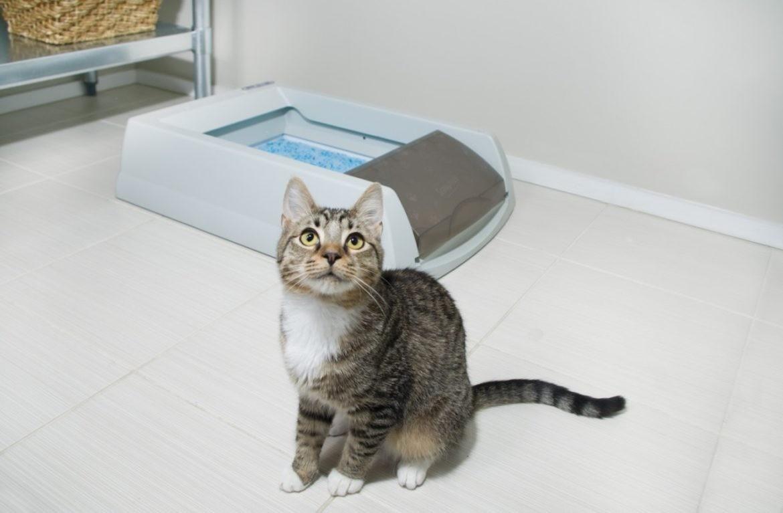 Кошка может начать гадить из-за дискомфортных условий в лотке