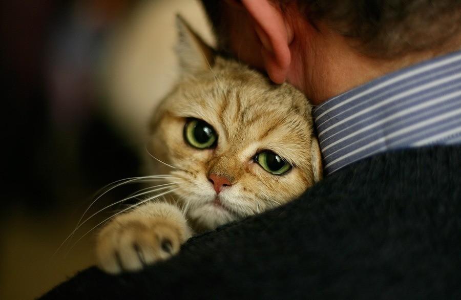 Средняя продолжительность жизни кошек составляет 10-15 лет