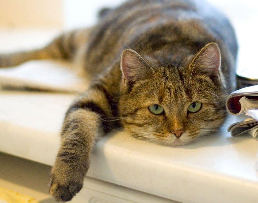 Средняя продолжительность жизни кошек составляет 15-18 лет