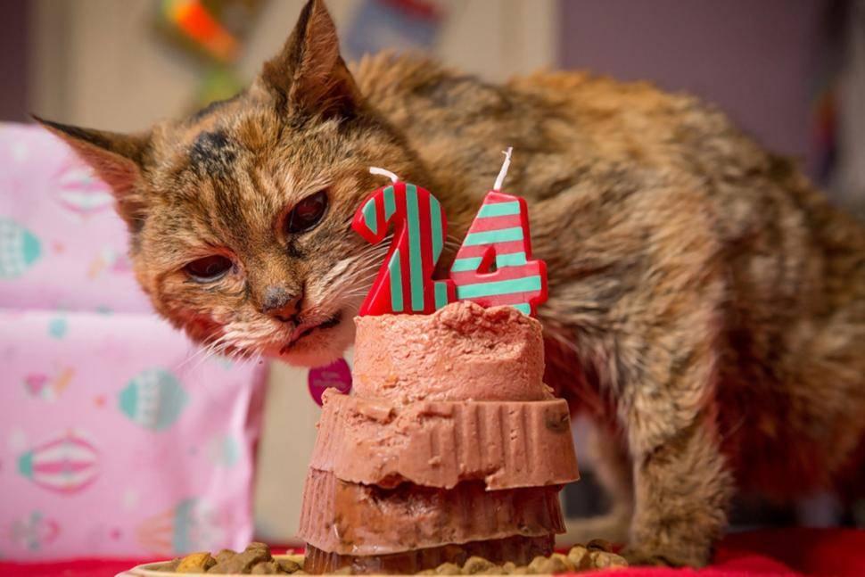 Существует несколько систем, как посчитать возраст кошки по человеческим меркам, и ни одна из них не является точной