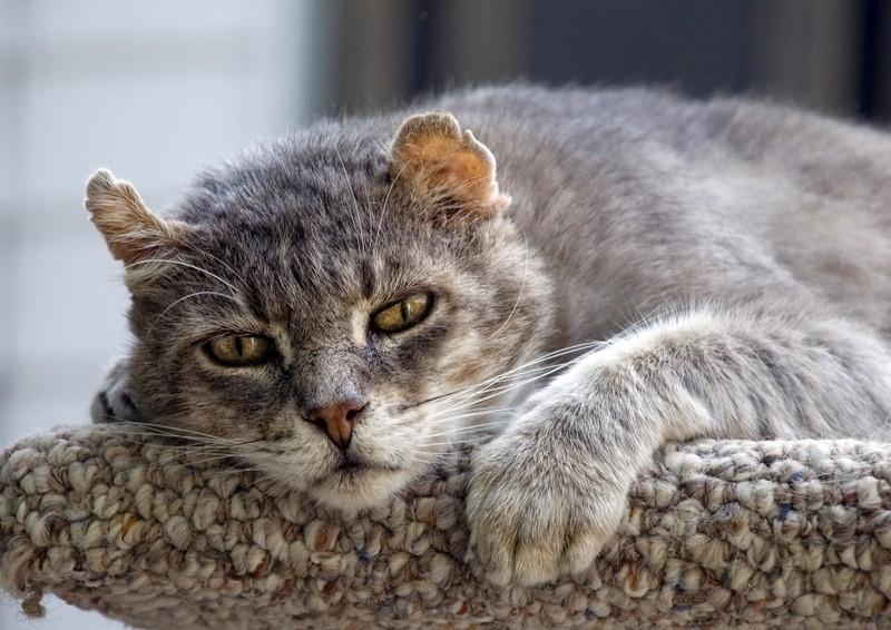 К 12-15 годам кошка становится медлительной и уставшей