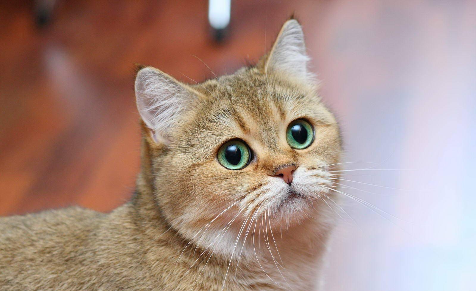 На первом году жизни кошка осваивается в этом мире и учится жить