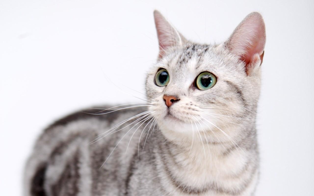 У 2-3-летней кошки уже сформированы привычки и характер