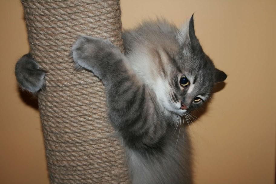Размер когтеточки должен соответствовать росту кошки