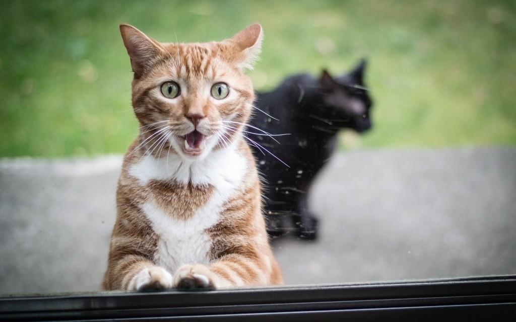Нет смысла кричать или наказывать кошку – это приведет к тому, что она озлобится