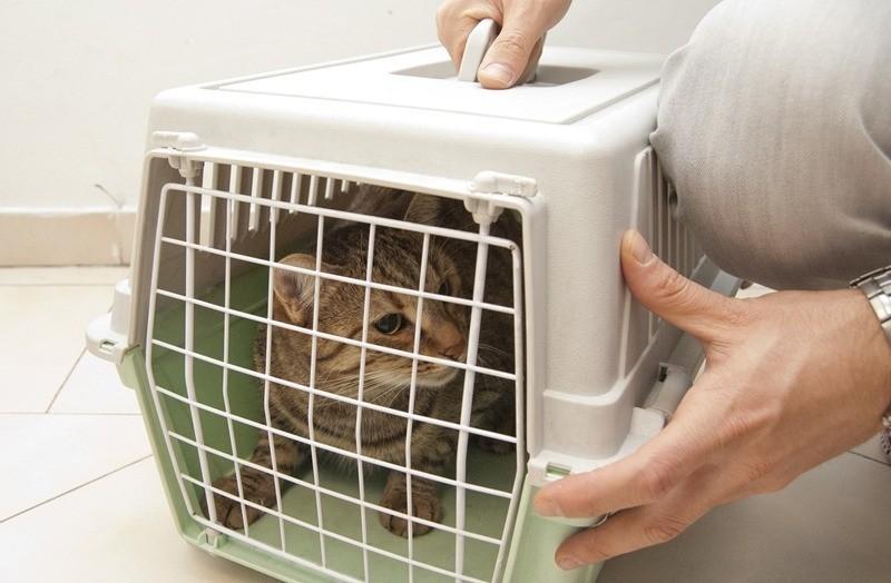 «Новую» кошку обязательно вносят в дом в переноске