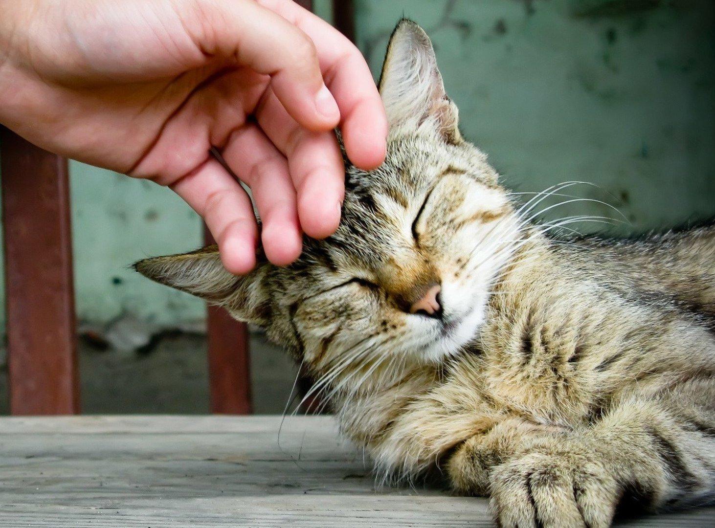 После обработки коготков нужно похвалить кота за выдержку